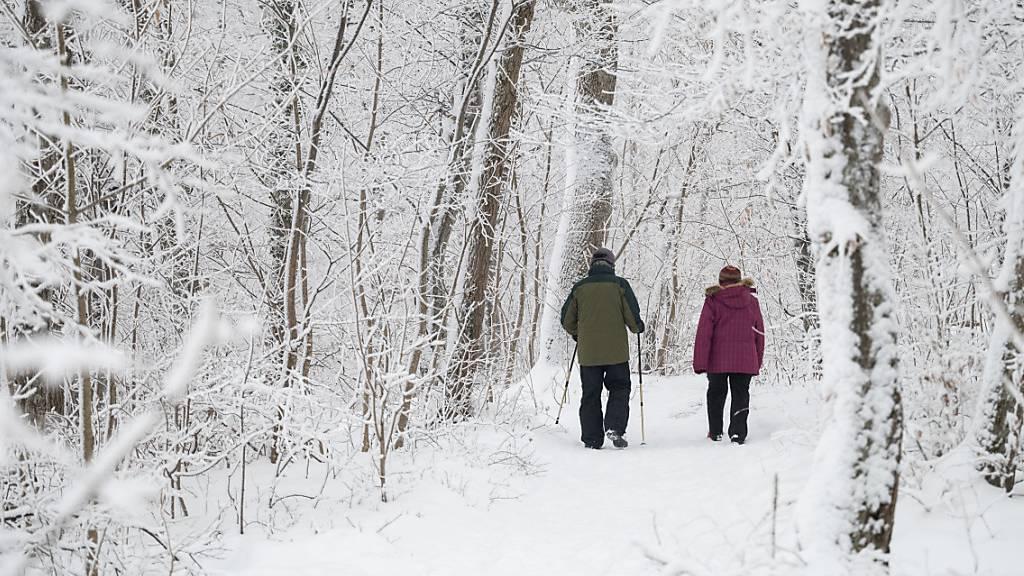 Die starken Schneefälle vom Januar 2021 haben auch im Thurgauer Wald ihre Spuren hinterlassen. Umgestürzten Bäume bieten dem Borkenkäfer einen idealen Lebensraum. Mit einer Aufräumaktion soll das Schadholz im April entfernt werden. (Symbolbild)