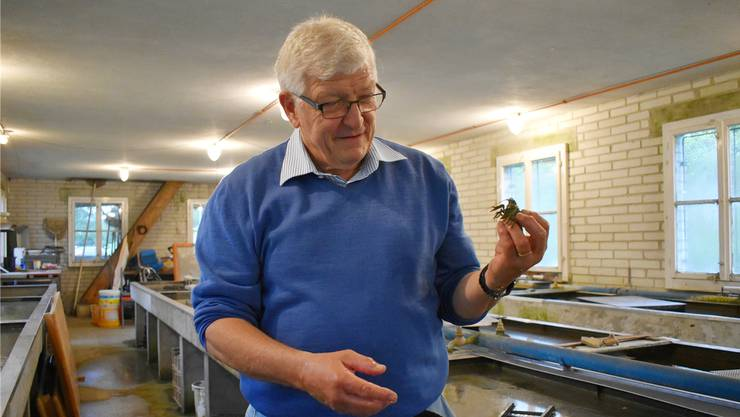 Martin Hohermuth setzt sich für die Dohlenkrebse ein.