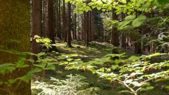 Produktivere Wälder sind besser gegen Extremereignisse wie Stürme geschützt. (Symbolbild)