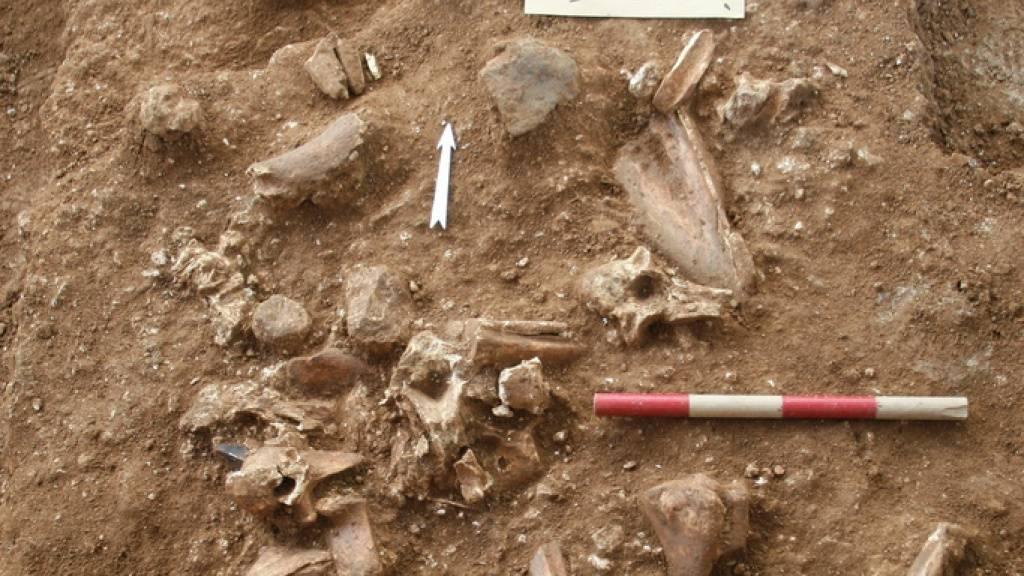 Gebeine und Gegenstände an der Grabungsstätte Nesher Ramla im zentralen Israel. Dort wurde ein bisher unbekannter Menschentypus entdeckt, der gleichzeitig lebte wie der Homo sapiens und Ähnlichkeiten mit dem Neandertaler aufwies.