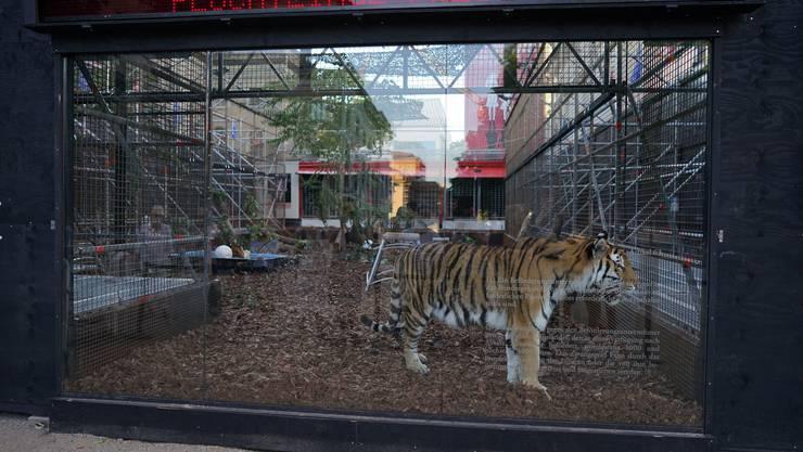 Nächsten Dienstag sollen die Tiger lebendige Flüchtlinge verspeisen.