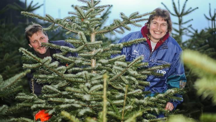 Verlieren trotz vorweihnachtlicher Hektik ihre gute Laune nicht: Beat und Anita Hugi in einer ihrer Weihnachtsbaum-Plantagen.