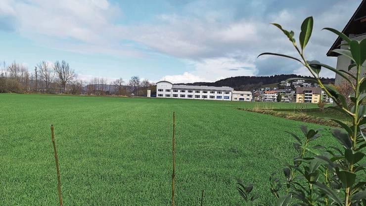 Statt auf der «Neumatte» möchte die FDP auf der «Surematte» (Bild, im Hintergrund Pfiffner) Land für die Firmen bereitstellen.