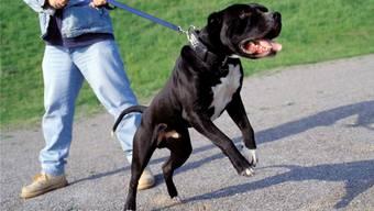 Ein Polizist wurde von einem Hund gebissen und musste ins Spital. (Symbolbild)
