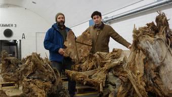 Die beiden Dendroökologen Daniel Nievergelt (links) und Ulf Büntgen mit ihrem ältesten Fundstück.