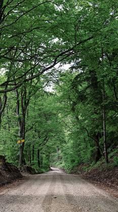Der Wald ist menschgemacht.