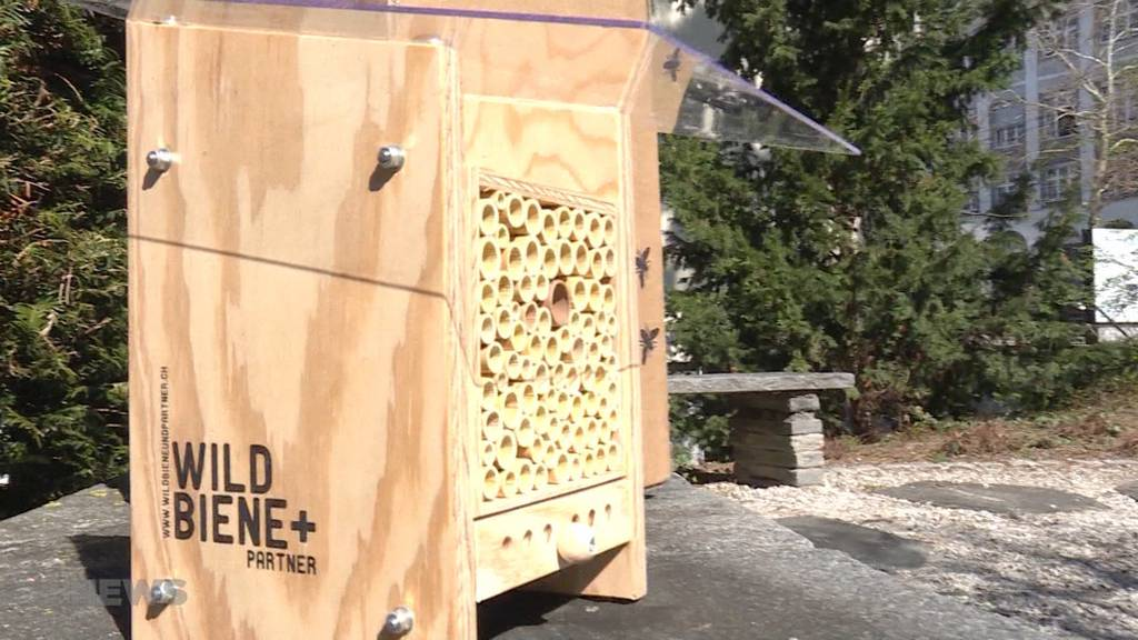 Wildbienen per Post geliefert