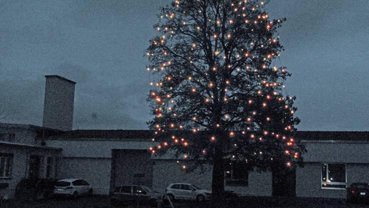 Prächtige Beleuchtung eines Baumes.