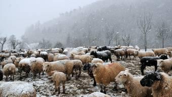 Winter-Intermezzo , Schnee bis in tiefe Lagen. Bretzwil 29.1.2020