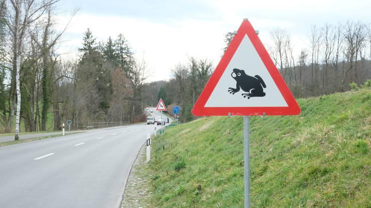 Der Weg zur Geburts- und Laichstätte ist oftmals von Strassen zerschnitten. Die Tafel hier ausgangs Urdorf soll die Autofahrer darauf aufmerksam machen.