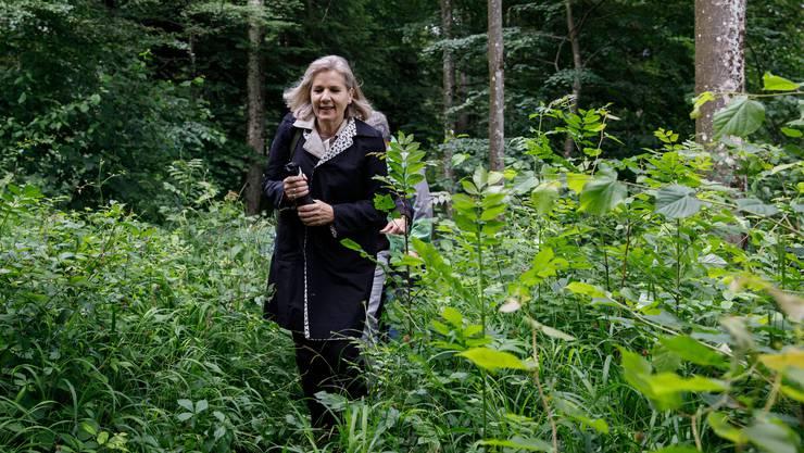 Eine Grüne im Grünen: Brigit Wyss auf offizieller Naturexkursion zum Thema «Biodiversität im Wald».