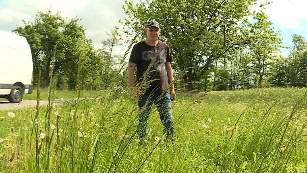 Erneutes Verschwinden von Bienen in der Region