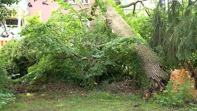 Baum flog ins Wohnzimmer
