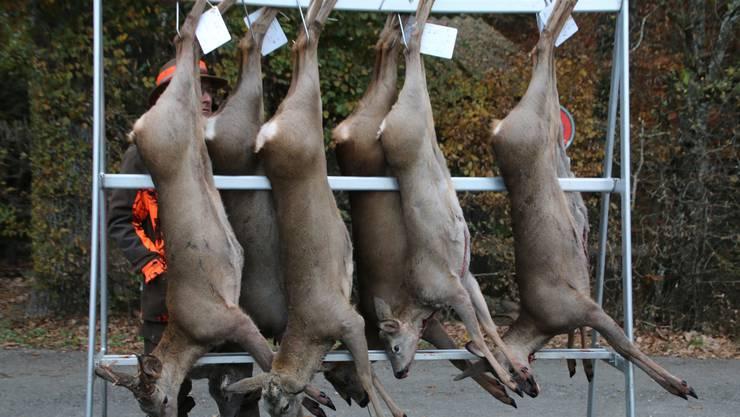 Innert Wochenfrist sind tote Wildtiere der Jagdverwaltung zu melden.