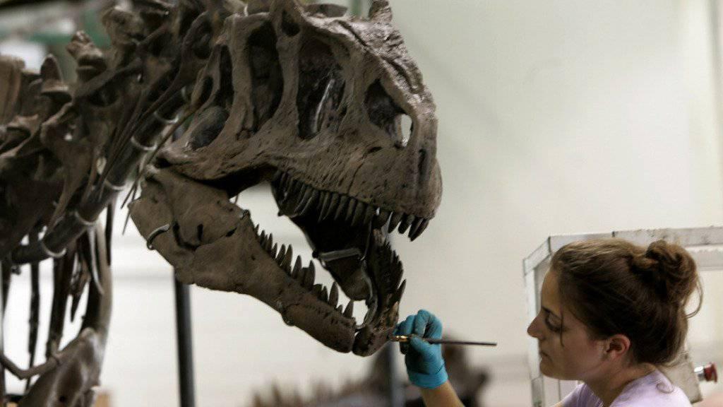 Dinosaurier-Skelette zu versteigern