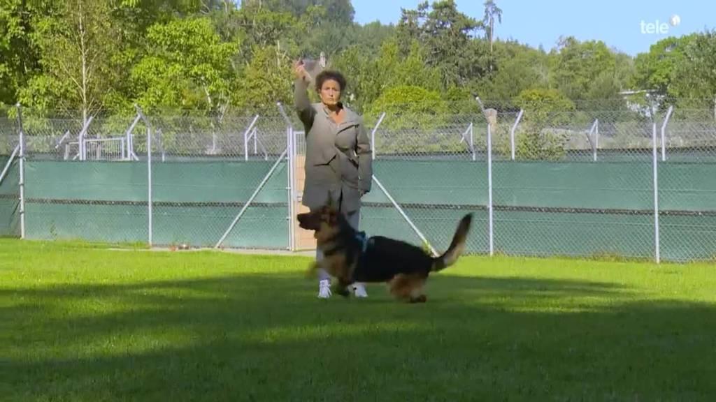 Dog Bootcamp / Tierheim-Hundeschule