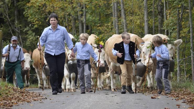 Familie Kamber vom Ober Passwang zieht mit ihren geschmückten Simmentalern auf den Schauplatz
