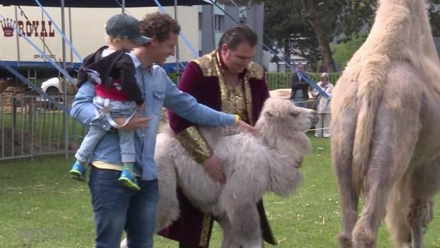 Wölfli tauft Kamel