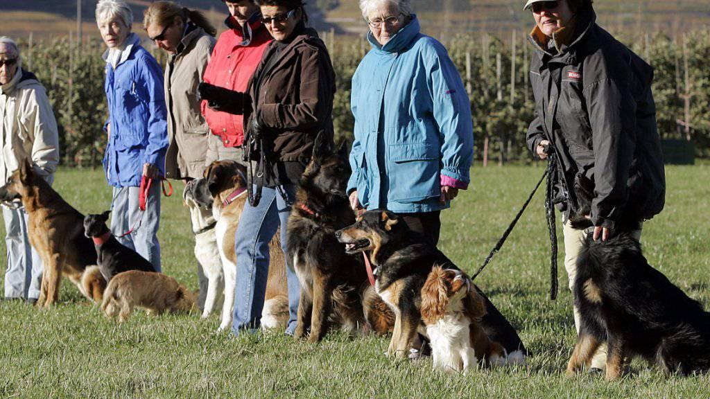 Die Walliser Regierung befürwortet die Wiedereinführung der obligatorischen Kurse für Hundehalter. (Archivbild)