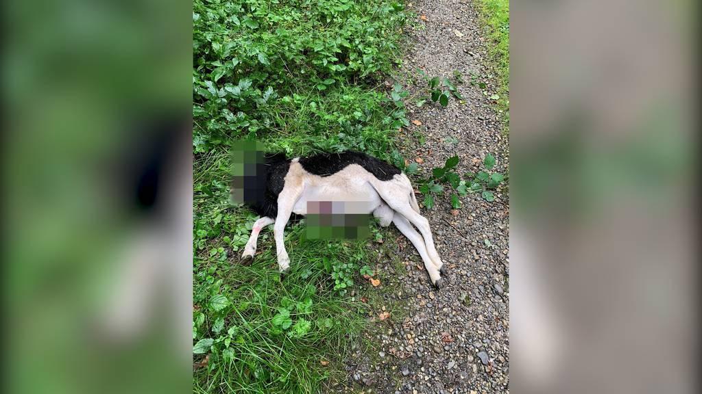 Grausiger Fund: Spaziergänger entdeckt geköpfte Ziege in Hochfelden (ZH)