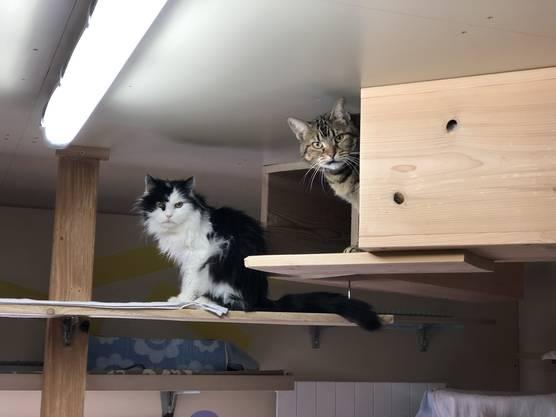 Die zwei Katzen entsprechen dem Klischee: Katzen sind Divas. Der schwarz-weisse Gigi und die getigerte Mira sind scheu. Sie sind immer zusammen anzutreffen.