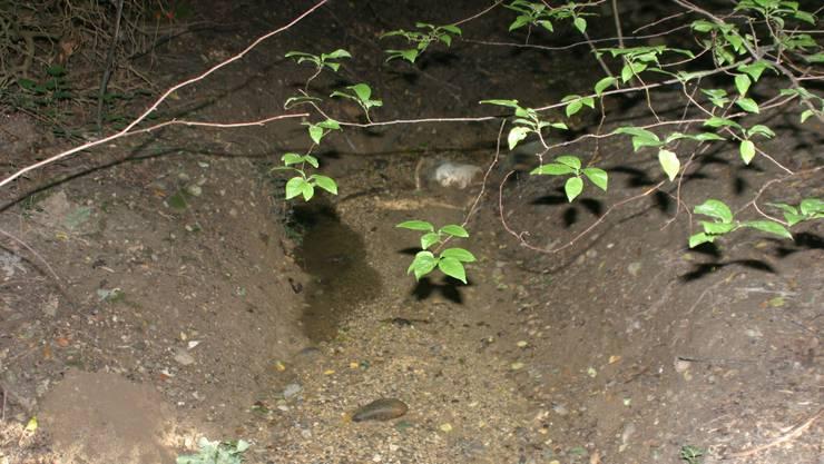 Der geplante Damm soll Allschwil vor Hochwasser am Lützelbach schützen.