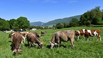 Landwirte, die bei der Fütterung der Kühe vorwiegend auf Frischgras setzen, können wirtschaftlicher Milch produzieren.