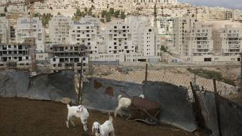 Ziegen von Palästinensern vor einer israelischen Siedlung (Archiv)