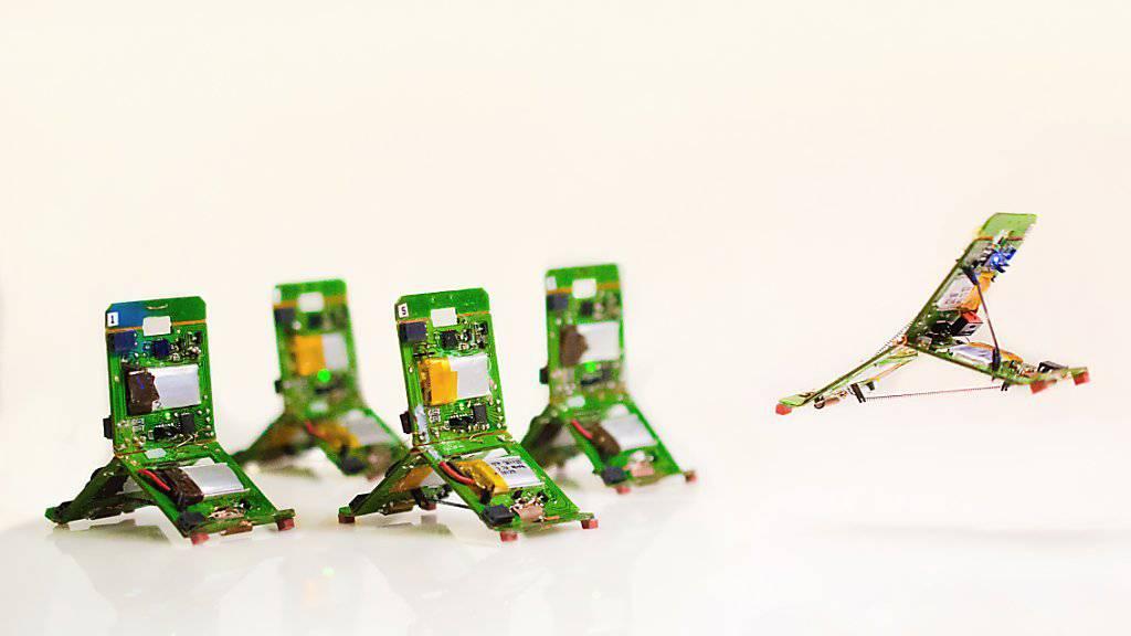 Simpel gebaut, aber im Schwarm ganz schön stark: Tribots können in Zusammenarbeit Probleme lösen, die die Fähigkeit des Einzelnen übersteigen.