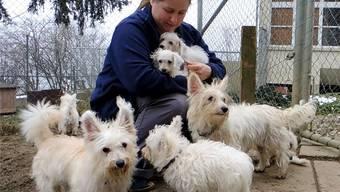 Tierheimleiterin Anita Gasser wärmt die jüngsten Hunde in ihren Armen.Gal/Archiv