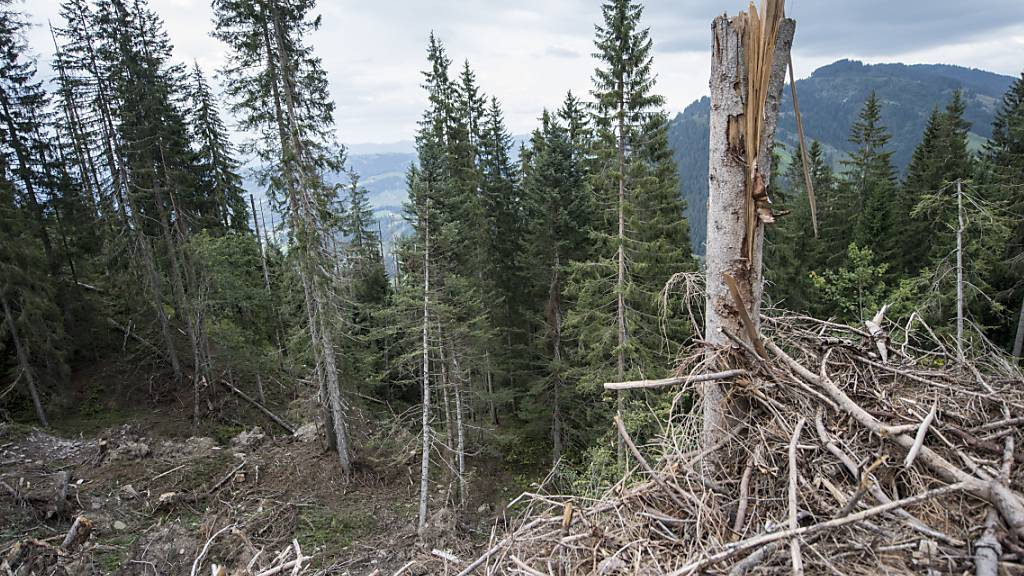 Vom Sturm zerstört: Nun wird der Schutzwald um Escholzmatt-Marbach aufgerüstet. (Archivbild)