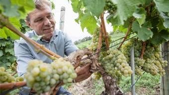 Winzer Andreas Meier aus Klingnau ist Inhaber des Würenlinger Weinguts zum Sternen. (Archiv)