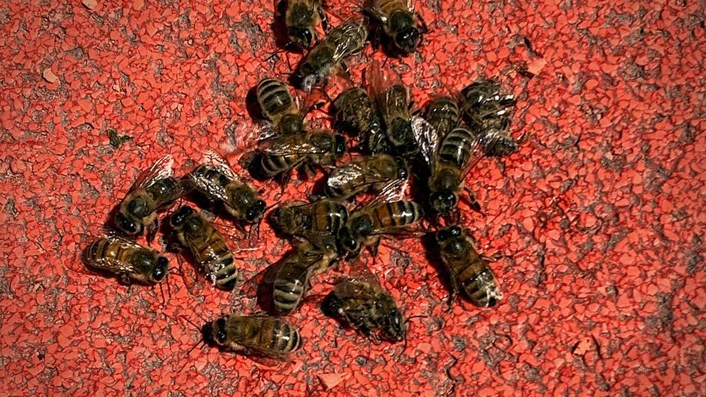 Rätselhaftes Bienensterben auf dem Roten Platz