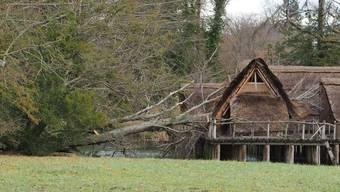 Zwar brachte der Sturm nur drei Bäume im Park zu Fall. Einer davon stürzte aber auf die Pfahlbausiedlung und zerstörte eines der Häuser.
