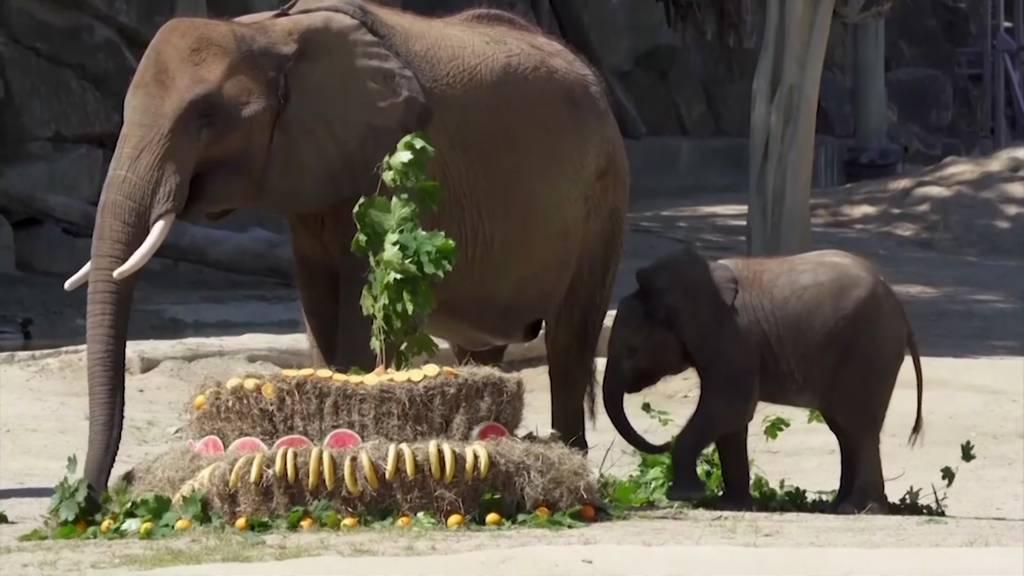Wiener Zoo: Ein Festmahl für die Elefanten