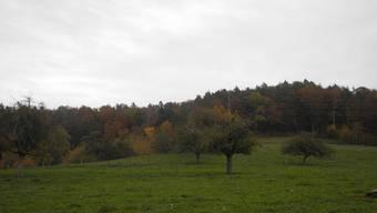 Im Gebiet Holeeberen auf dem Gubrist soll ein neues Reservoir entstehen.