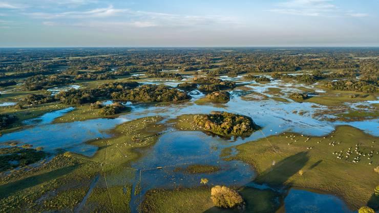 Das Pantanal fasziniert mit der einzigartigen Tier- und Pflanzenwelt. Bild: iStockphoto