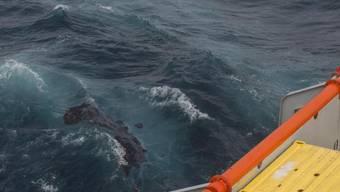 Öl aus den Treibstofftanks des gesunkenen Frachters treibt westlich vom Küstenort La Rochelle.