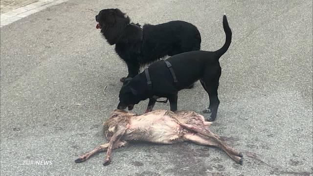 Hunde zerfleischen Reh in Wohnquartier