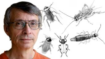Armin Coray ist einer von wenigen wissenschaftlichen Zeichnern,die noch von Hand arbeiten.