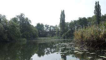 Der Ziegeleiweiher ist ein Naturschutzgebiet von kantonaler Bedeutung.