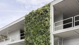 Drei bürgerliche Kantonsräte wollen begrünte Wände mit einer höheren Nutzungsziffer der Liegenschaft belohnen.