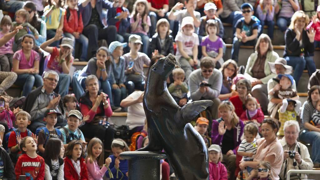 Seelöwen kann man in Knies Kinderzoo nur noch bis Ende Jahr sehen.