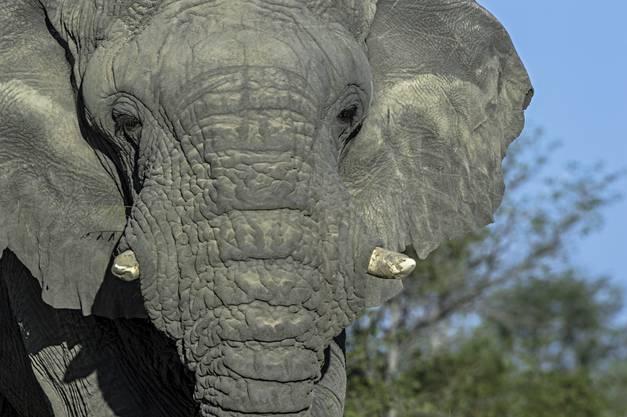 Reinhard Strickler fotografiert gerne Gesichter, auch jene von Elefanten.