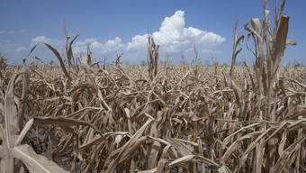 Dürre in den USA führt zu Explosion der Rohstoffpreise für Mais, Getreide und Soja.
