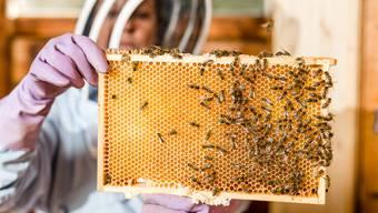 Die Saison der Limmattaler Imker lief unterschiedlich gut. Für diese Abweichung hat Roger Wigger, der in Dietikon Imker ist, eine Begründung: Das Problem ist meistens hinter dem Bienenkasten.» Will heissen: Die Fehler machen die Imker, nicht die Bienen. (Symbolbild)