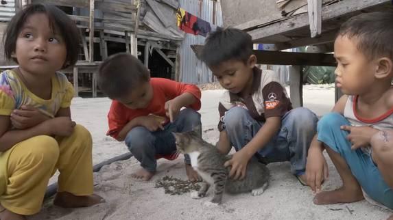Die Bewohner dieser Insel lieben Katzen – das ist eine kleinere Katastrophe
