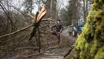 Die Aufräumarbeiten im Wald beschäftigen die Förster. Von Spaziergängen wird abgeraten.