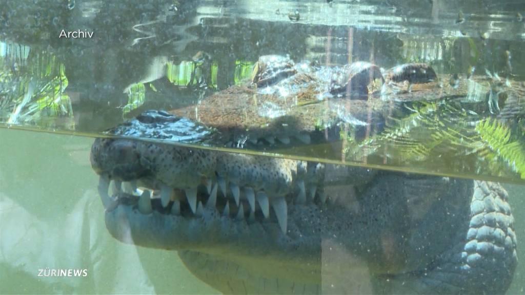 So kam es zum Krokodil-Biss im Zoo Zürich