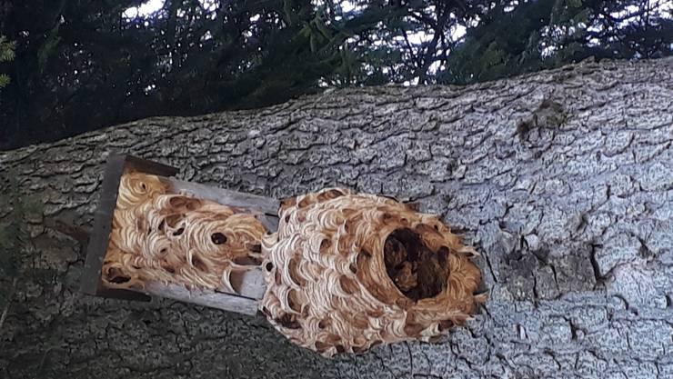Hornussen-Nest